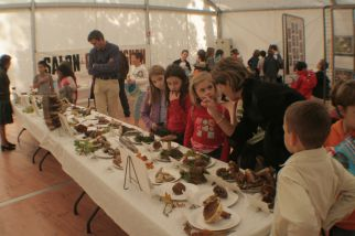 Exposition SMR au Week end de l'Arbre